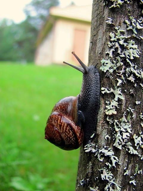 At A Snails Pace ~ Snails & Snail Mail