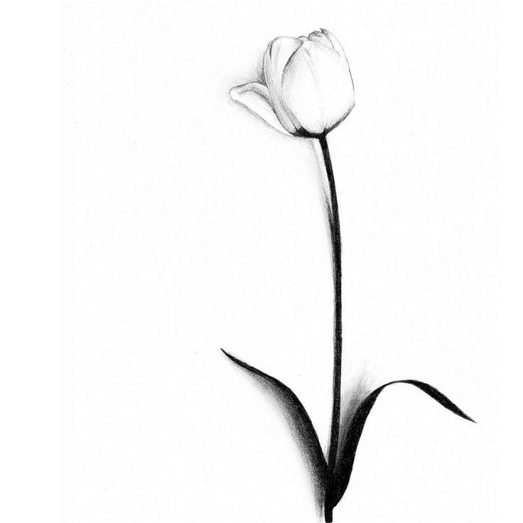 White tulip - ClipArt Best - ClipArt Best