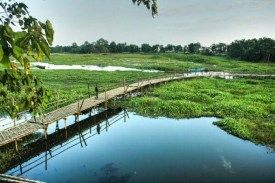 #Majuli Islands– This is definitely one of the most #fascinating place and a destination #spot, with a mix of #amazement ,#wonder, #respect, #culture, #reverence, #nature&religion. Nothing can beats #Majuli Island in terms of #fascinating facts about this place, #culture, people and their #lifestyle. It isconsidered as one of #largest river Island in the #world .The island has a #Vaishnavite cult so visiting during #Janmashtami is sure to be an amazing and #visual treat.