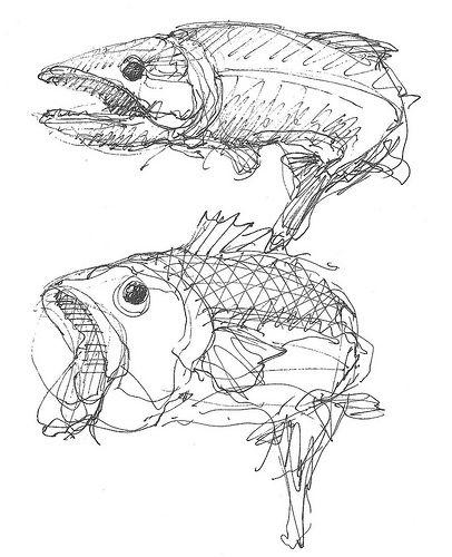 Op deze tekening zijn veel lijnen gebruikt. Samen vormt het een vis.