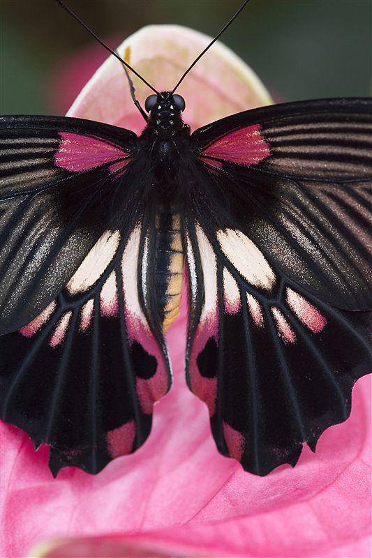 Butterfly photograph by Richard Verdegaal Fotografie.