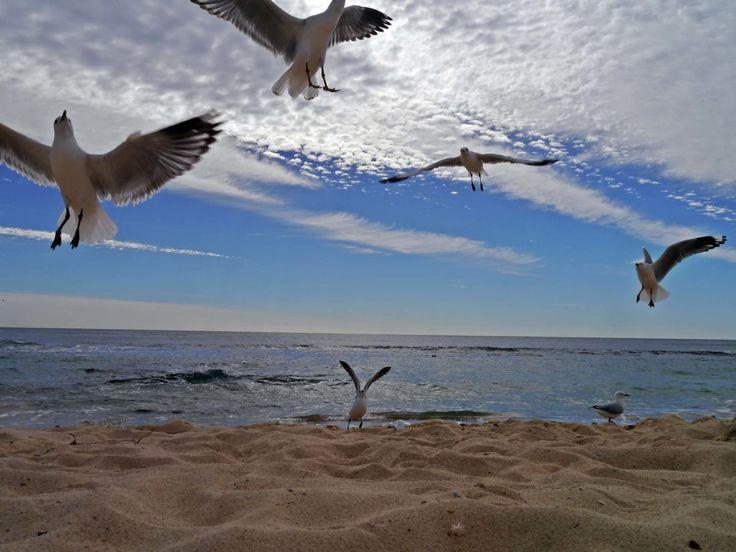 Seagulls Flying, Birds, Clouds, Blue Sky, Send, Horizon, Sealine,