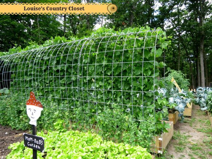 Hog panel in a raised bed to grow beans and peas she for Great vegetable garden ideas