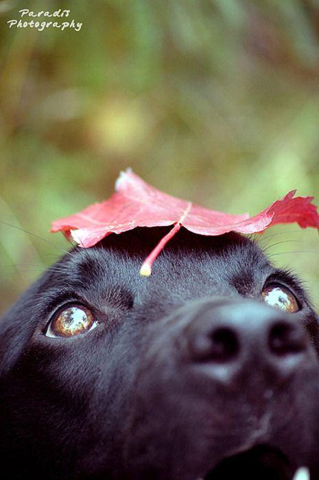 animal, black, cute, dog