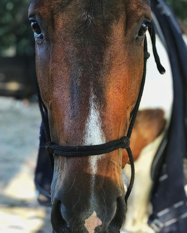 I love horses but this horse I love the most. Such a beautiful soul. This is Sailor. . . . . . . . . . . . . #horse #horsesofinstagram #portrait #emotions #beauty #animal #iloveanimals #portraitphotography #photography #eyes #colour #shotoniphone #mobilephotography #vsco #happyplace #farmlife #hobbies #horselife #photographer #life #moodygrams