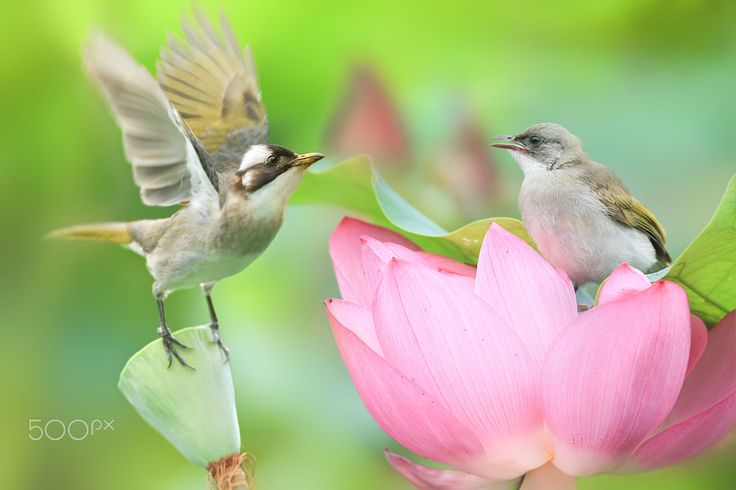 Teach Me To Fly by Sue Hsu on 500px