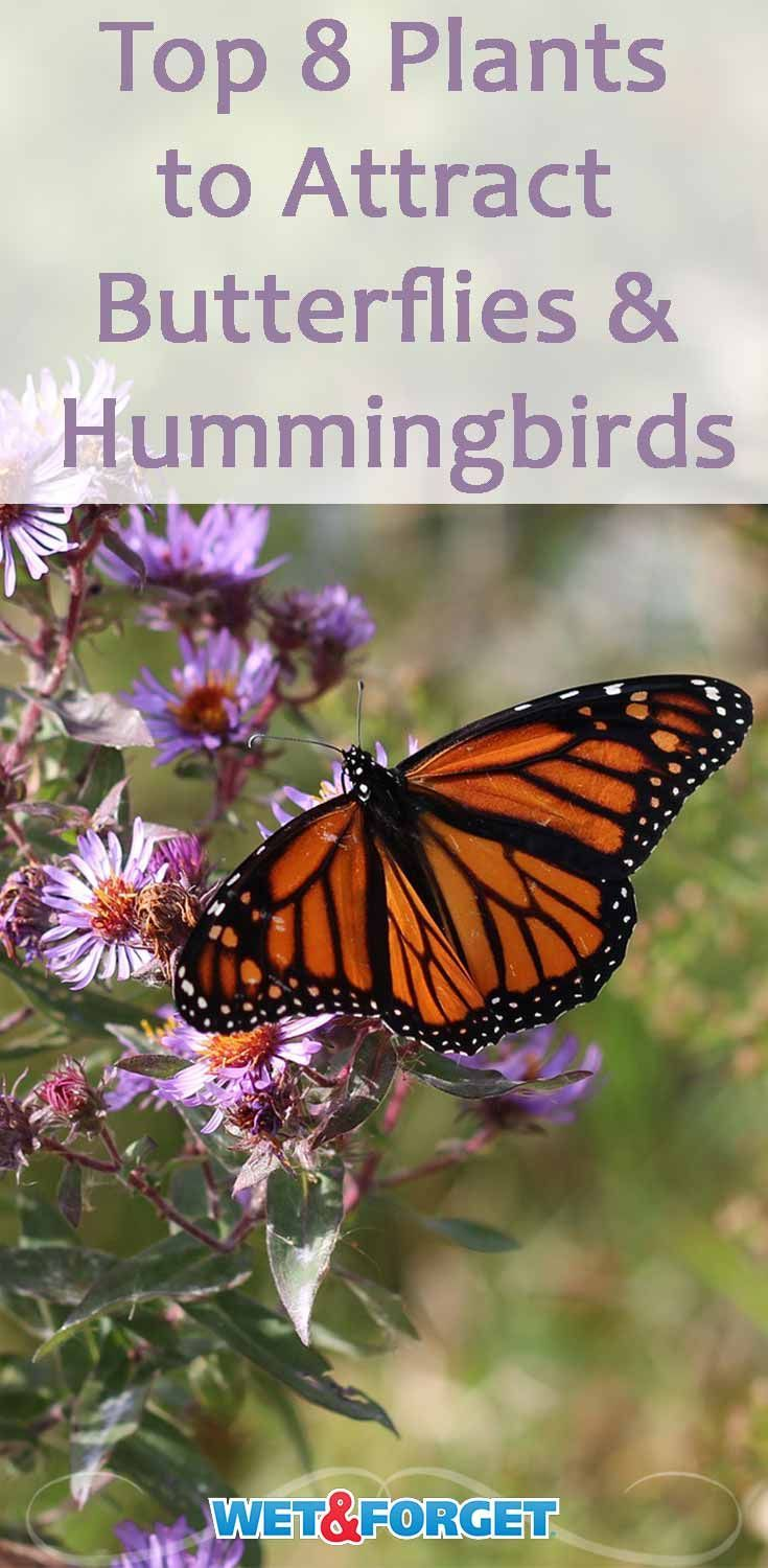 Plants That Attract Butterflies And Hummingbirds
