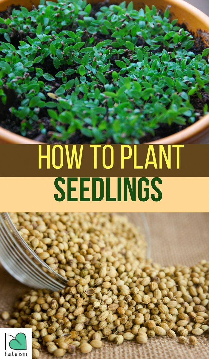 Learn How To Plant Seedlings- Watch this great inf…