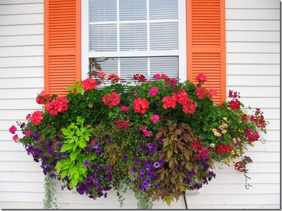 beautiful window boxes #summer #flowers #window boxes