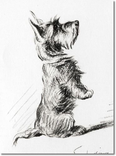 ~Vintage Scottish Terrier Art~ Lucy Dawson, one of my all-time-favorites!