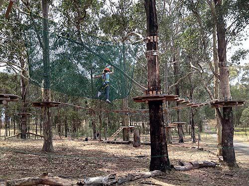 Tree Top Adventure Park in Western Sydney