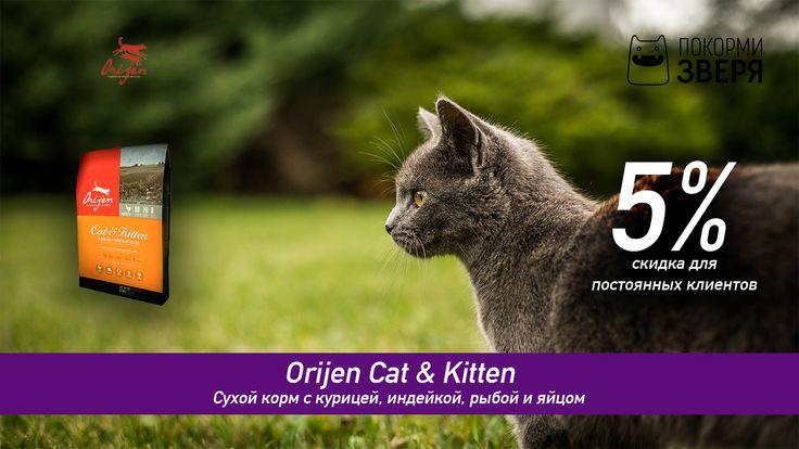 Внешняя безобидность представителей семейства кошачьих весьма обманчива, ведь эти звери потомки настоящих плотоядных хищников. Потому в рационе у них должно быть достаточно много мяса причем самого разного.  🐾Скидка для постоянных клиентов — 5%🐾 #кошка #кот #котики #котята #кормдлякошек #cat #catsanddogs #pets #покормизверя #feedthebeast #orijen