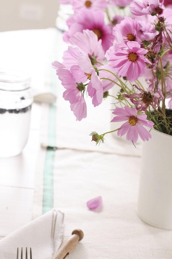 Planter lavande 25 pinterest plant de lavande plantation lavande - Quand planter la lavande ...