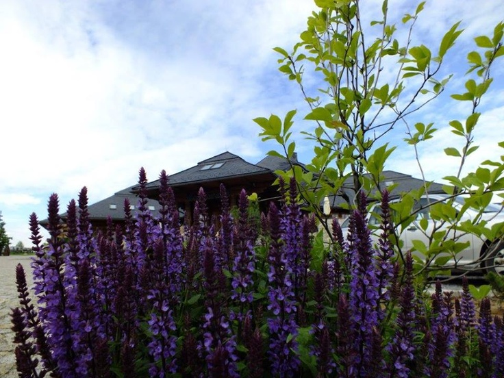 Uroki naszego ogrodu:) #garden #hotel