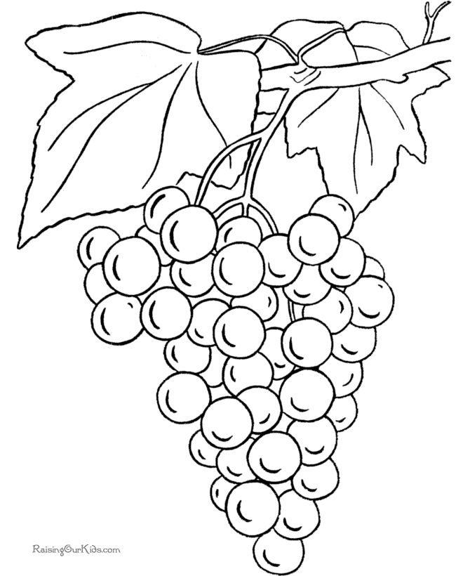 Grapes coloring page to print and color