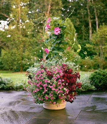 25 best ideas about tropical pot fillers on pinterest container flowers container plants and - P allen smith container gardens ...