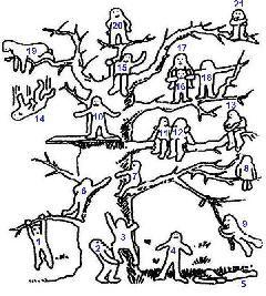 Moje pravdy - Test: Kde na stromě jste?