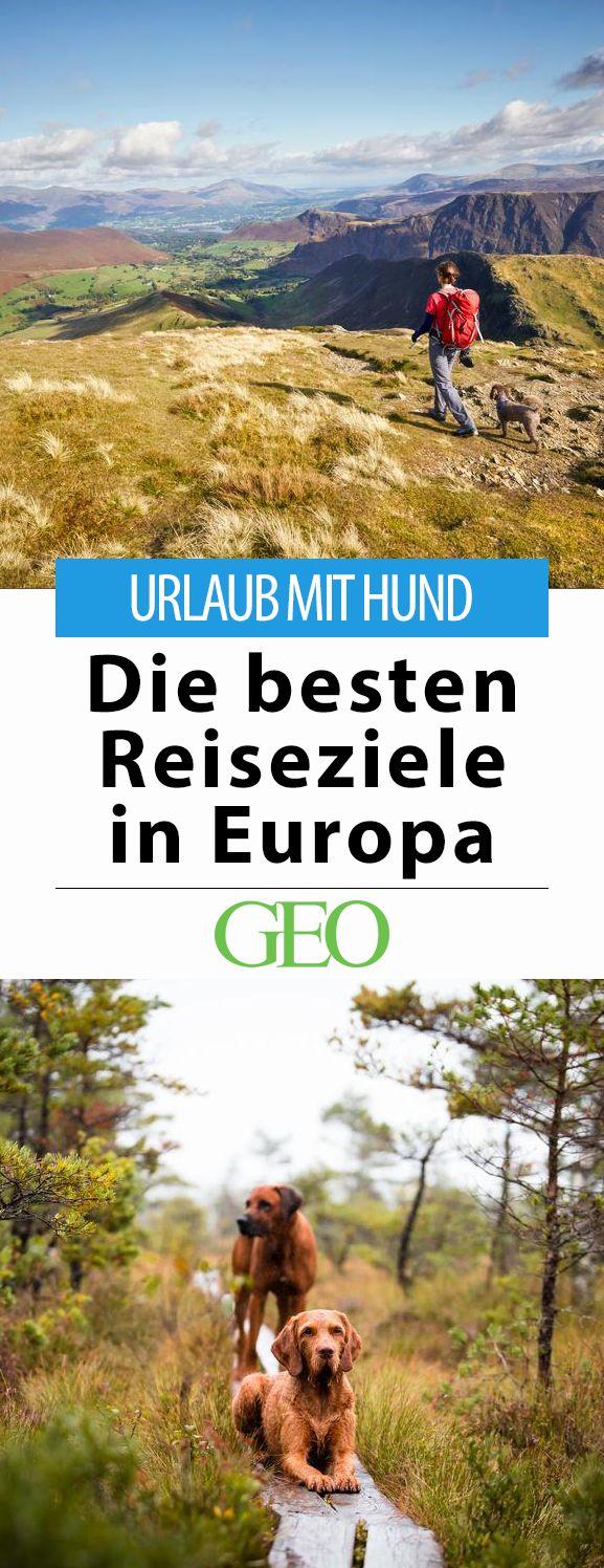 Urlaub mit Hund: Die besten Reiseziele in Europa