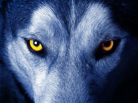 Are You Aware-Wolf? -  The First Step Towards Feeding The Right Wolf Is Becoming Aware Of Their Existence - A.C.C. In my previous article'Which Wolf Are You Feeding?'we met the two wolves fighting for control in your  head over your very own thoughts & actions and, seeing as you almost never ma...