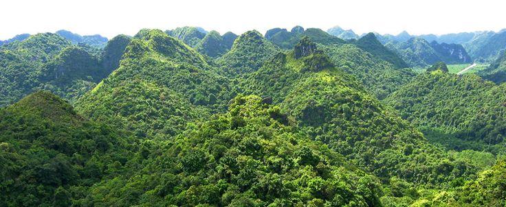 Cat Ba national park. #vietnam #halongbay #catbaisland #travel