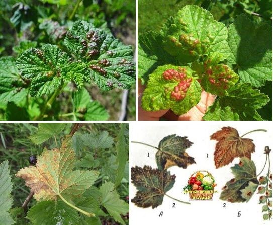 Болезни растений - Дачные хитрости от А до Я