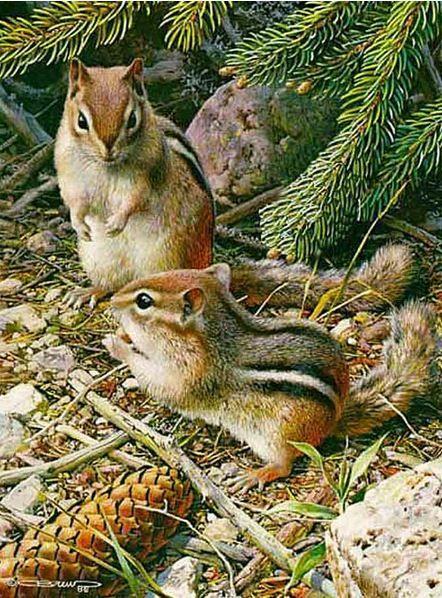 Carl-Brenders . Chipmunks!