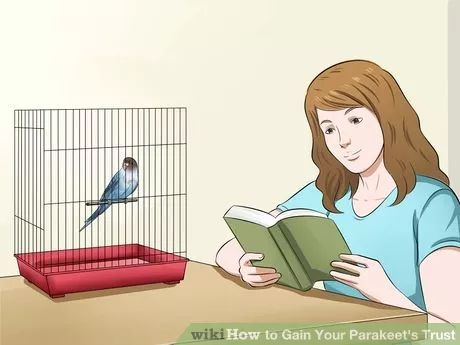 Training your Parakeet