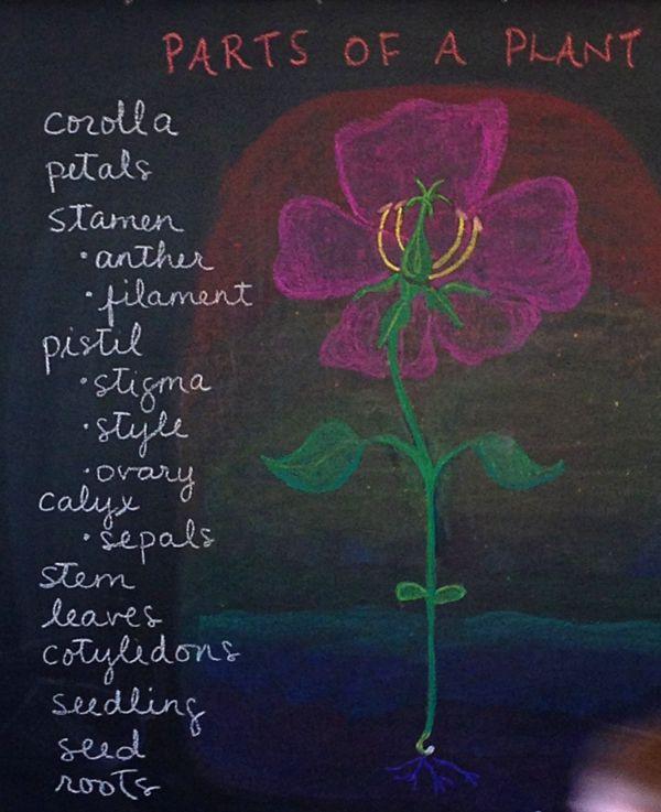Botany chalkboard drawing