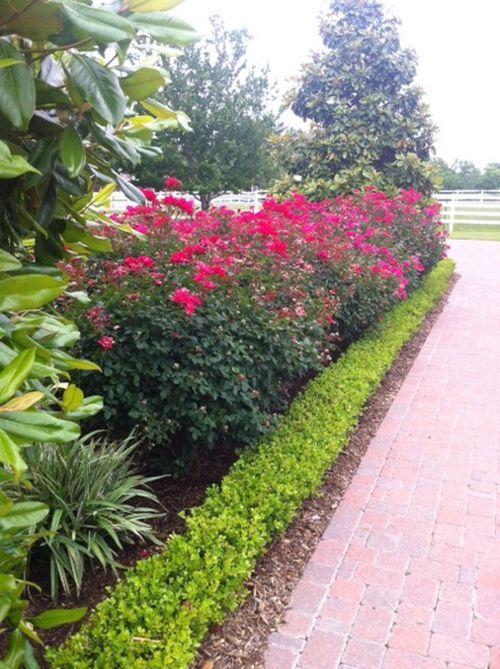 Landscape Design Knockout Roses Boxwood Pavers The Woodlands
