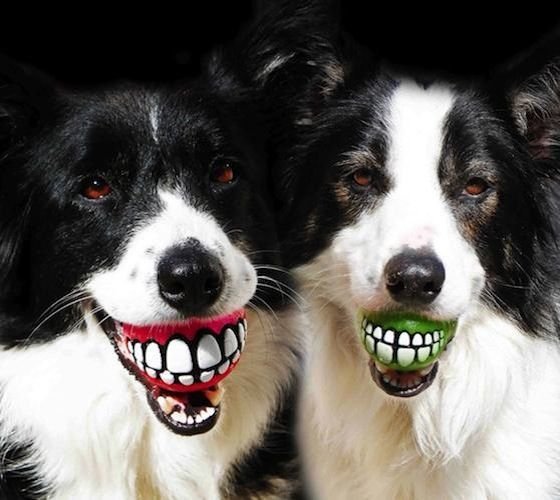 dog chew toy that make them look like they have teeth