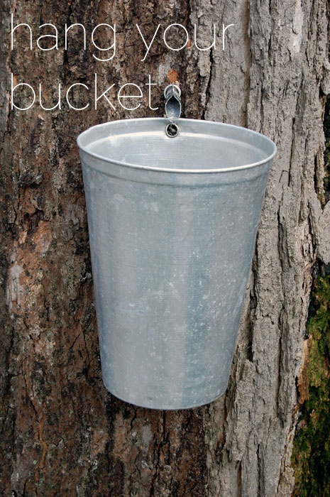 how to make maple syrup from a tree