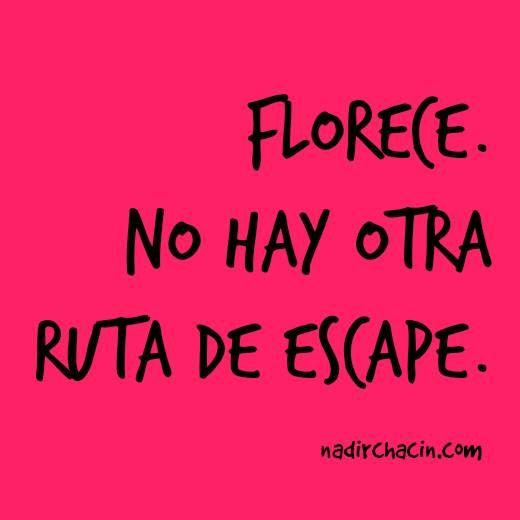 #sersiendo #NadirChacin #MyGrammar #Frases #Quotes #Words #Palabras