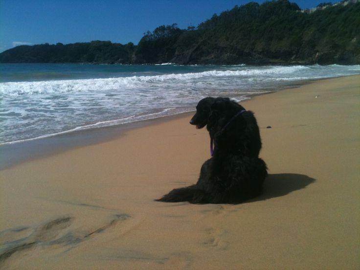 Studio dog on vacation.
