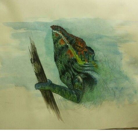 Iguana a matite di chiara paduano