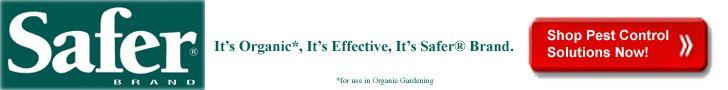 How to Control Japanese Beetles: Organic Gardening