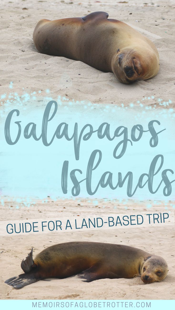 In this in-depth guide to visiting the #Galapagos Islands without a cruise, you will learn about the different day trips you can take and the best places to eat and stay. #Ecuador