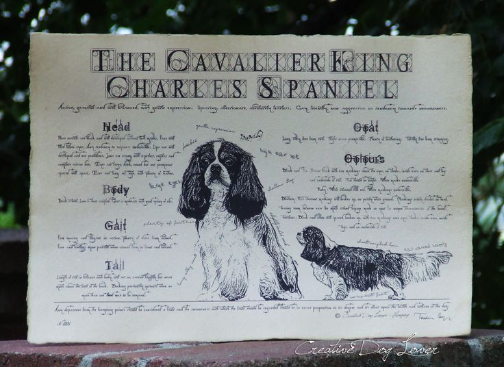 Antique styled dog standard - Cavalier King Charles Spaniel by Creativedoglover on Etsy