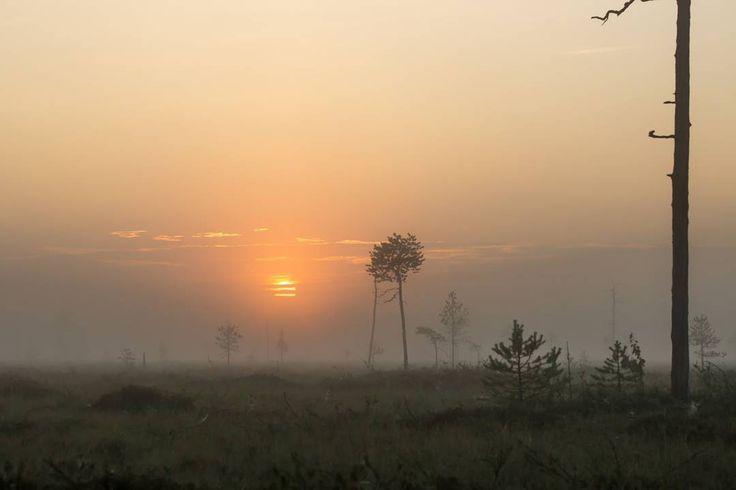 Photo by Wildlifesafaris Ranua. Swamps proportion of Ranua surface area is remarkable.  Clodberries thrive in those areas.  Soiden osuus pinta-alasta on huomattava. Hillat…