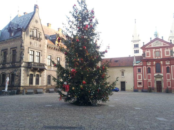 Vánoční strom na Pražském hradě. Christmas tree at Prague Castle (CZ). 2013