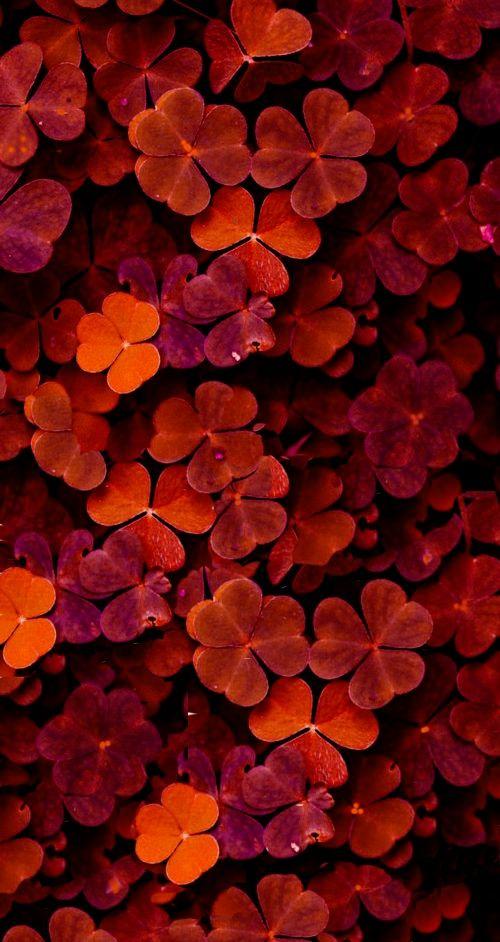 Ana Rosa ~ pink & orange