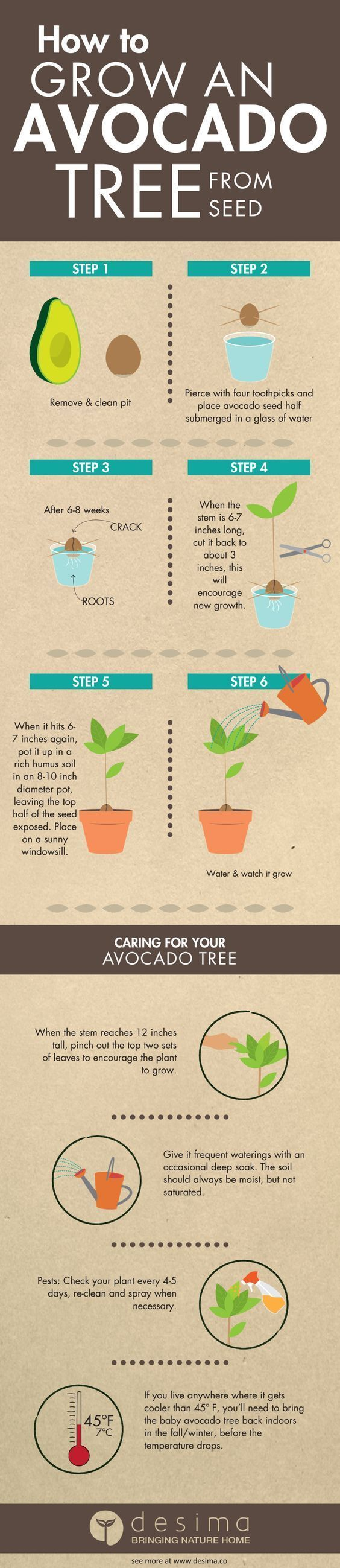 Grow Avocado From Seed It's Just So Easy   The WHOot (scheduled via http://www.tailwindapp.com?utm_source=pinterest&utm_medium=twpin&utm_content=post170439913&utm_campaign=scheduler_attribution)