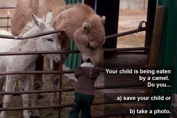Your child is being eaten by a camel. Do you… a) Save your child, or b) Take a photo