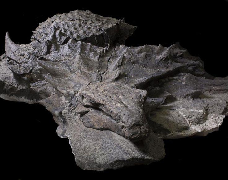 """15日のNational Geographicに、カナダアルバータ州で""""ミイラ化""""した新種の鎧竜化石が発見されたことが発表されました。まるで彫刻のようなインパクトのある姿をとどめた化石発見は、今後の..."""
