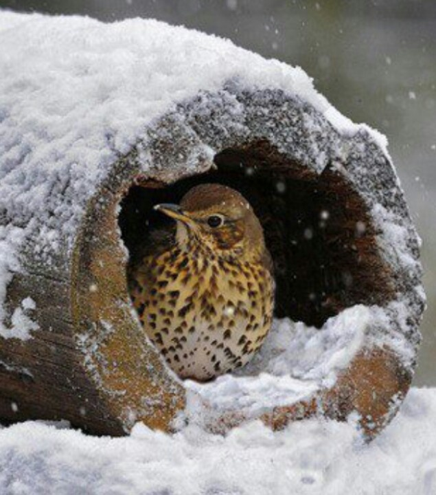 Bird In Winter Snow...just waiting for the sunshine!