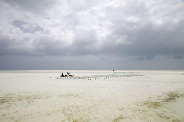 IB TREBBIEN – Seaweed Harvest 3
