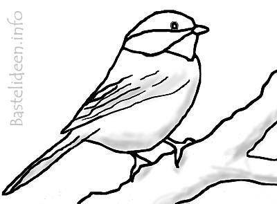 malvorlage schmuck  | Kohlmeise Vogel Malvorlage / Ausmalbild