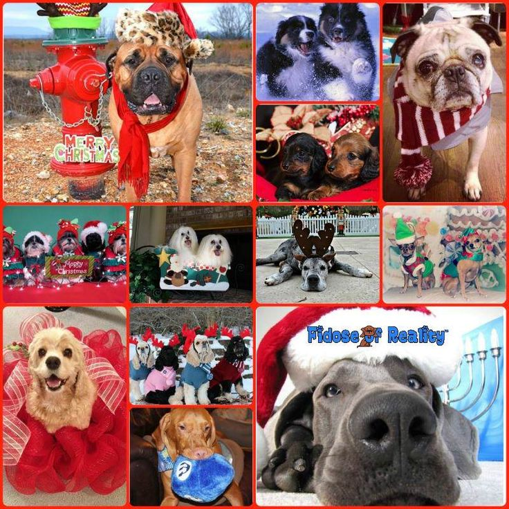 Holiday Dog Photo Contest for $700 in Prizes - Fidose of Reality