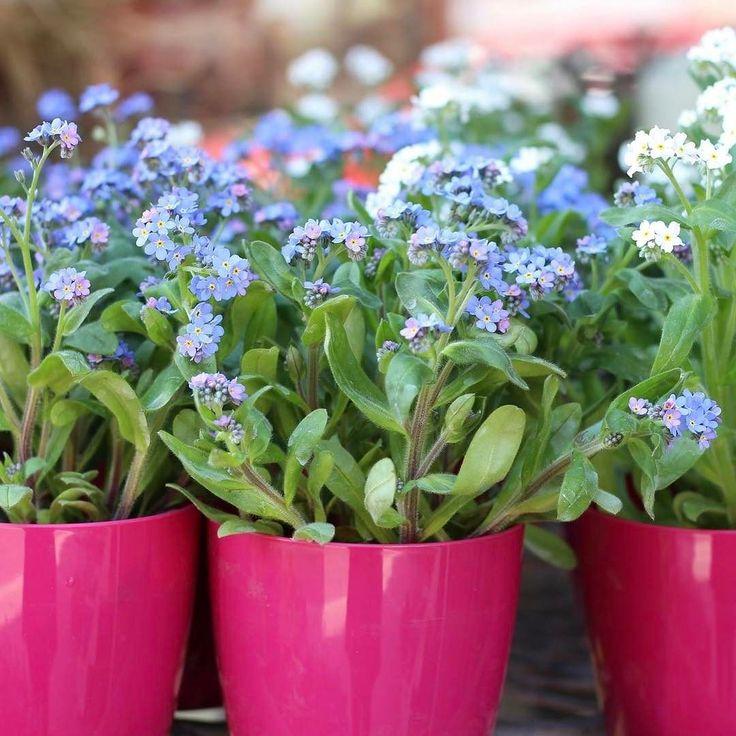 Dobré ránko va krásny deň všetkým  #kvetysilvia #kvetinarstvo #kvety #green #love #instagood #cute #follow #photooftheday #beautiful #tagsforlikes #happy #like4like #nature #style #nofilter #pretty #flowers #design #awesome #spring #home #handmade #flower #summer #interior #floraldesign #floral #naturelovers #picoftheday