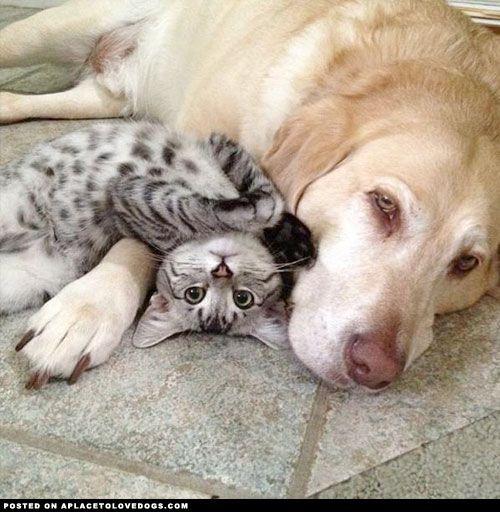 Cat Dog Snuggling