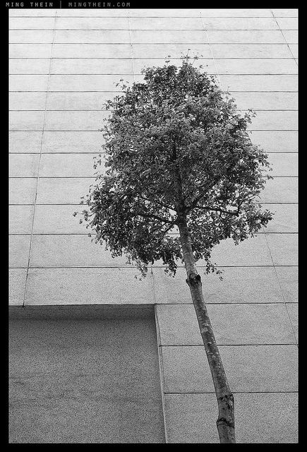 By Ming Thein, _8010971bw copy by mingthein, via Flickr